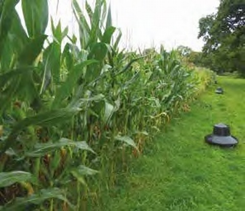 Keepa Maize (Rapid Fire)