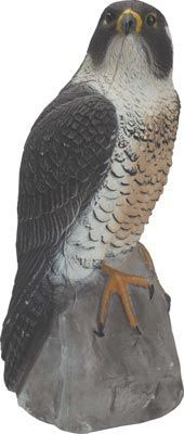 Peregrine Falcon Decoy