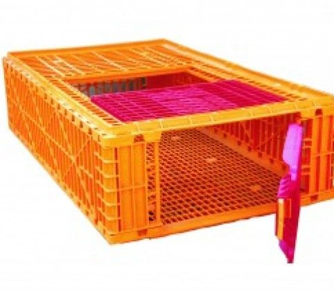 Plastic Transport Crate